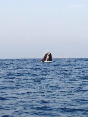 Whale Watching Photo Safari by Vallarta Adventures: Awesome