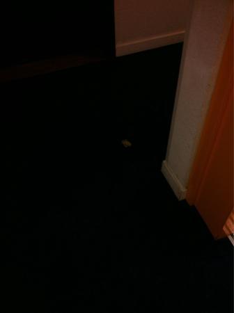 ResidHotel Grenette: Preservativo nel corridoio