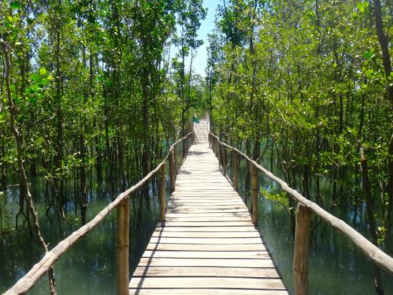 Kalibo, Philippinen: Nature Trail through the Mangrove Forest