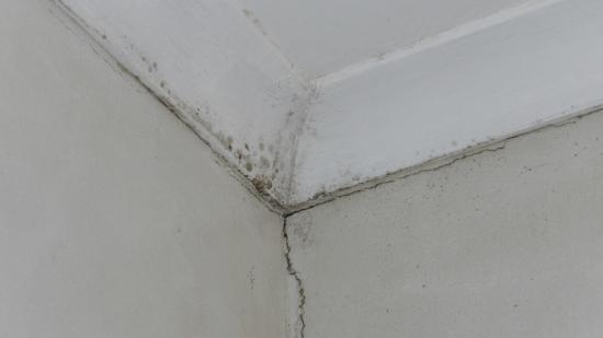 Swakopmund Guesthouse: More mould / dampness