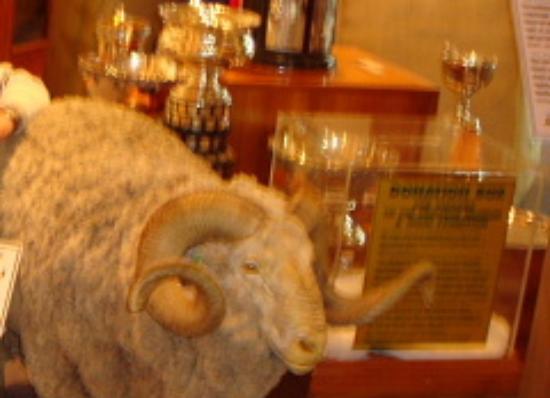 Tasmanian Wool Centre. : Wool Center