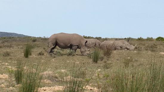 Garden Route: Familia de rinocerontes - set/14