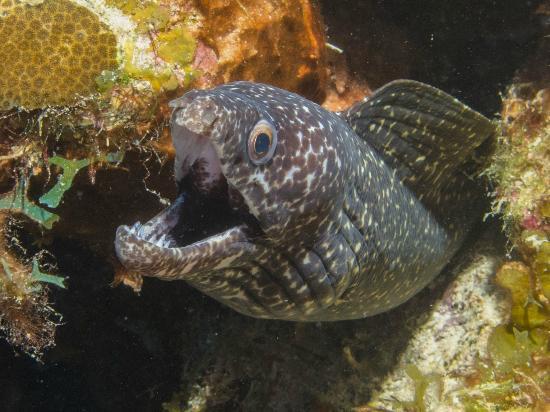 Fish Eye Photo: proper exposure and lighting