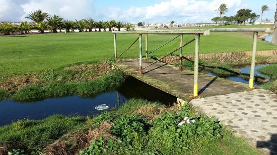 Fuerteventura Golf Club: Fauna volatile al riparo del ponticello