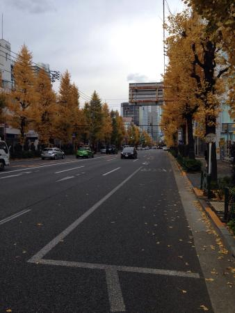 Kanda Jimbocho Bookstore Area : 晩秋、イチョウ並木色づく白山通り。