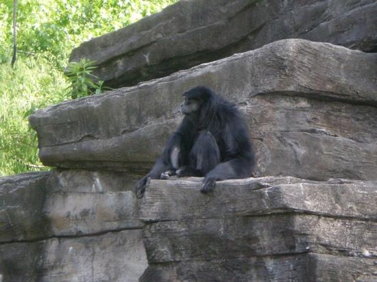 Baboon Picture Of Riverbanks Zoo And Botanical Garden Columbia Tripadvisor