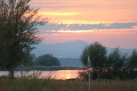 Fussacher Bucht Rohrspitz