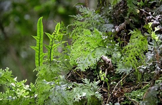 Ruggedy Range Wilderness Experience : Epiphytic ferns