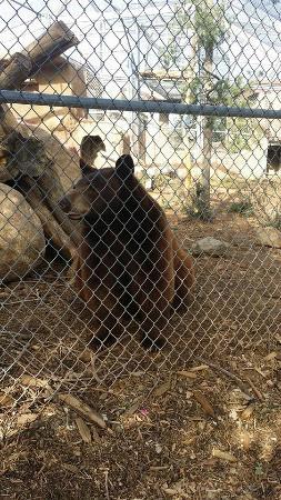 Heritage Park Zoo: Bear