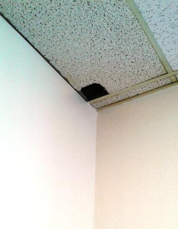 Best Western Plus Hotel & Conference Center: Hole in ceiling near conference rooms