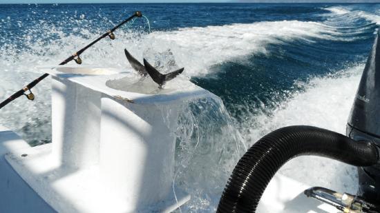 Papagayo Gulf Sport Fishing - North Pacific Tours : Tuna Tubes - Live Bait