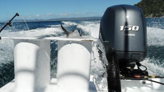 Papagayo Gulf Sport Fishing - North Pacific Tours : Yamaha 150 h.p. Engine
