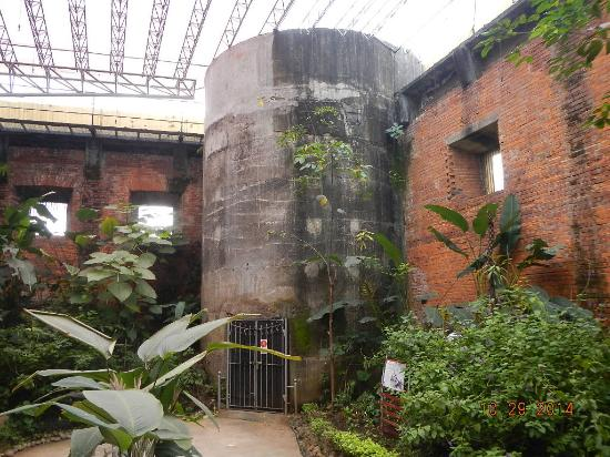 Museo Nacional (Nationalmuseum von Costa Rica): butterfly display