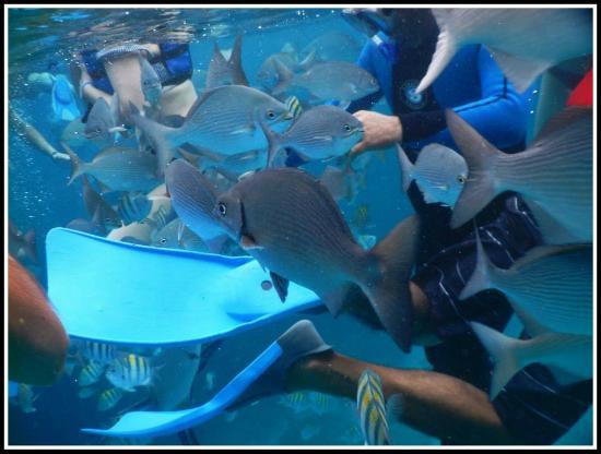 Coral Beach: Peces que nos invadian todo el tiempo, hermossoss