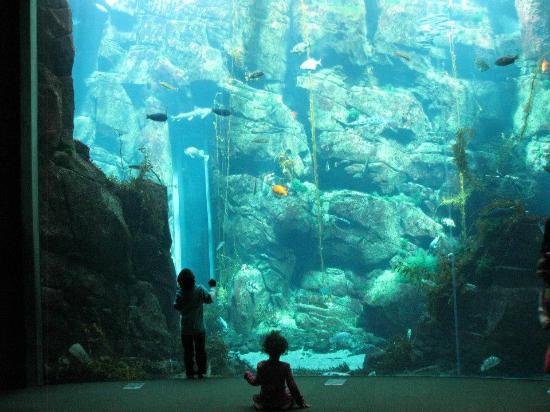 The Amazing Aquarium Picture Of California Science