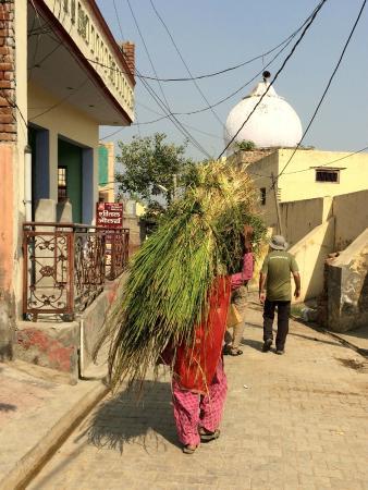 Rohtak, Indien: Walking through Samar Gopalpur village