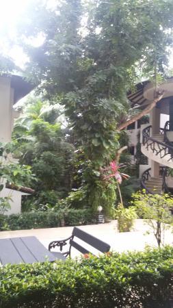 Anyavee Ban Ao Nang Resort : vegetazione