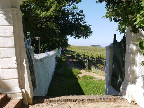 Jonkershuis Restaurant at Groot Constantia : The vineyards Groot Constantia