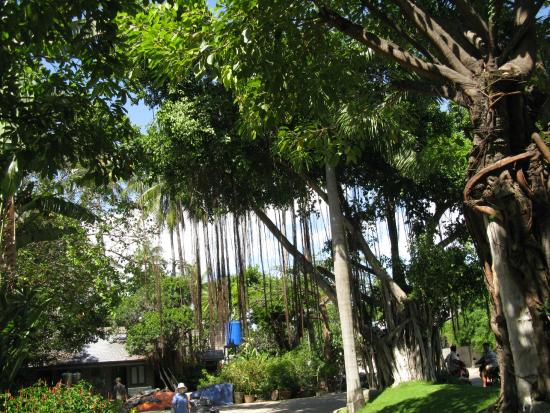 Oriental Pearl Resort : вид из номера