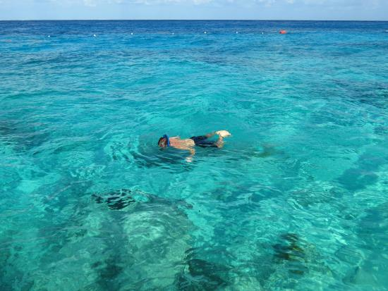 Buccanos Grill Beach Club Cozumel Clear Blue Water Perfect For Snorkeling