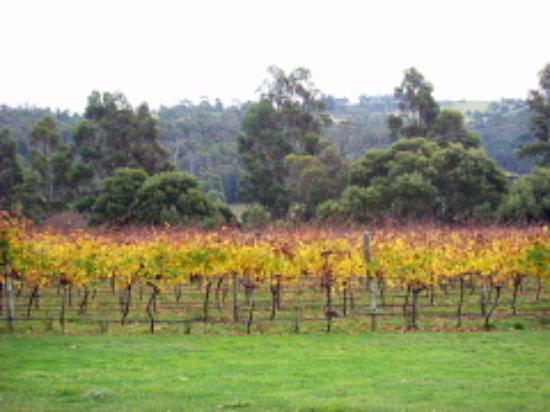 Rosevears Vineyard Cellar Door