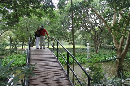 Cuenta con una laguna artificial fotograf a de jardin for Como hacer una laguna artificial