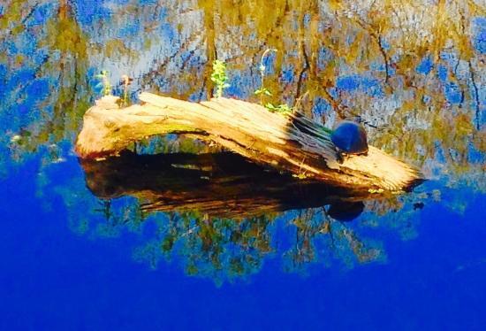 Six Mile Cypress Slough Preserve: Animal Life