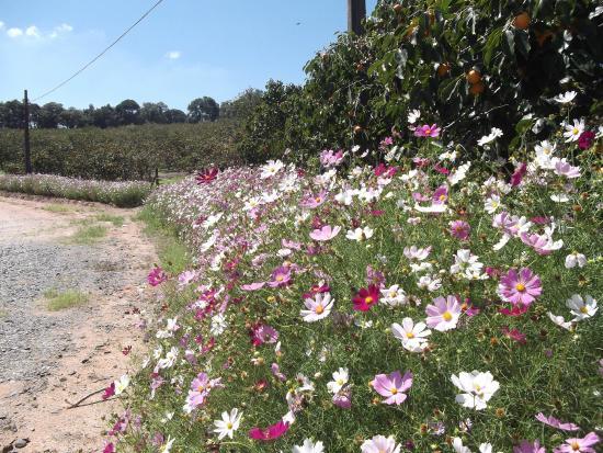 Piedade: Flores embelezando a paisagem