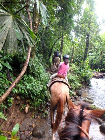 Alberto's Horses: Through the creek