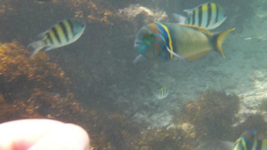Neptune Paradise Beach Resort & Spa: snorkel en el arrecife