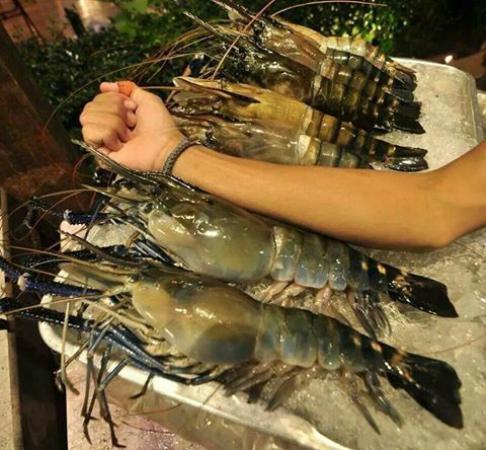 Savoey Restaurant : Nice size Lobsters