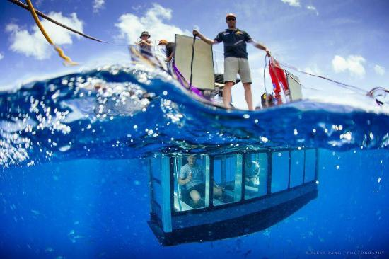 Adventure Bay Charters: The glass pod. Photo by Robert Lang Photography.