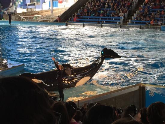 SeaWorld San Antonio: Atraccion