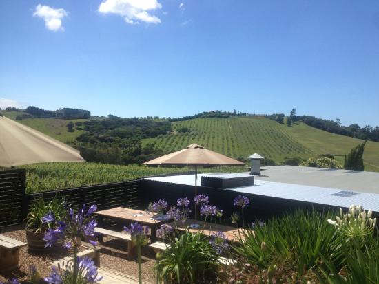The Shed Te Motu: the view from wine tasting