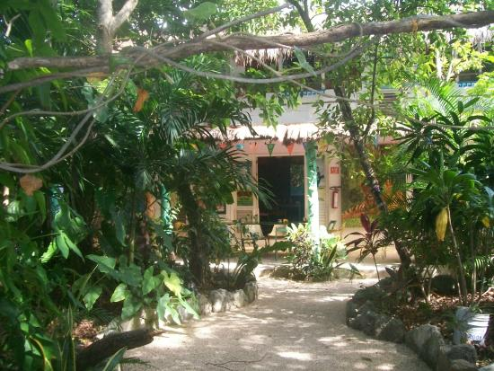 El Jardin de Frida: jardín y comedor