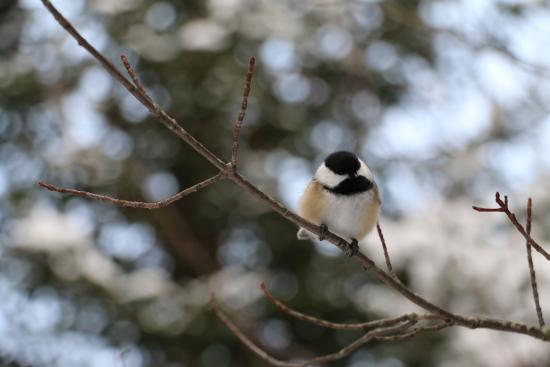 Domaine Saint-Bernard: Sparrow on the way
