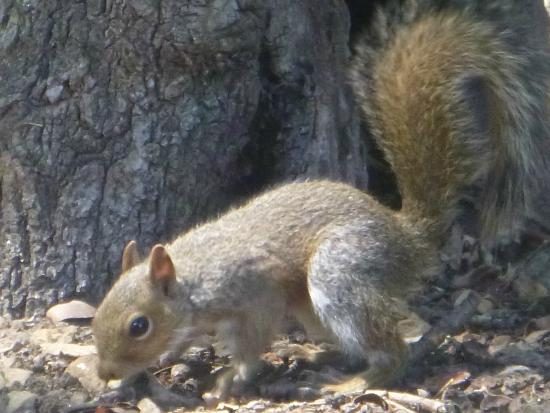 La Chataigne Wines and Guest Cottages: squirrels playing out back all morning
