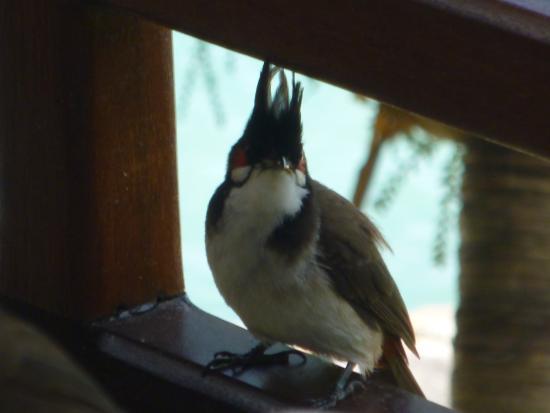 Residence Peramal: Déjeuner en compagnie des oiseaux
