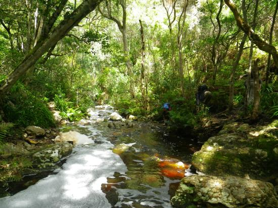 Southern Cape Tours: Getting ready to cross the stream on an indigenous forest hike