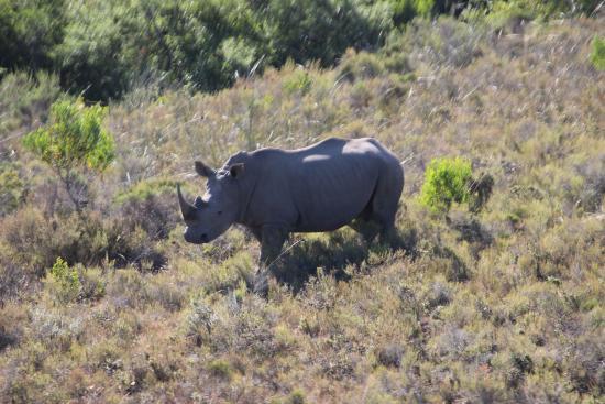 Nyala Safari Lodge: Black Rhino