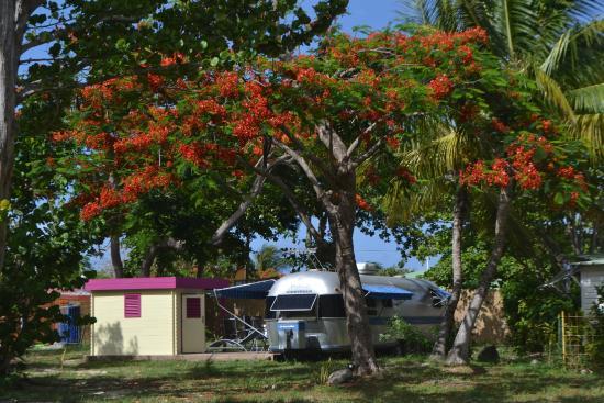 Airstream Paradise