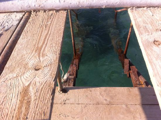 El Samaka Beach Hotel: Спуск с пирса в море