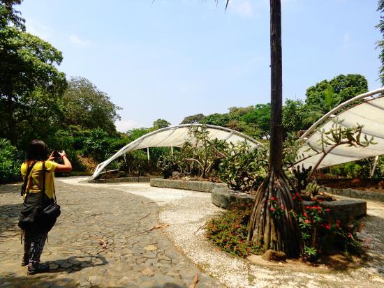 Es un lugar que esta cerca de todo picture of jardin for Caracteristicas de un jardin botanico
