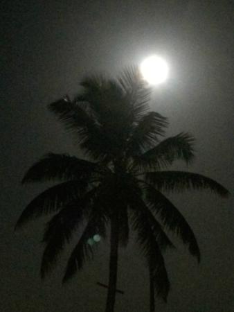 Bimini: Bahamas nights