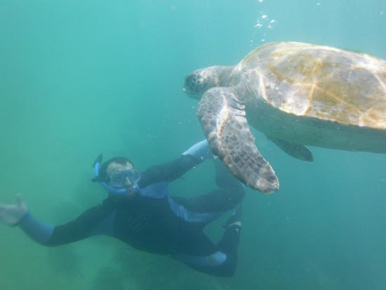 Iguanas Trips: Diving with turtles