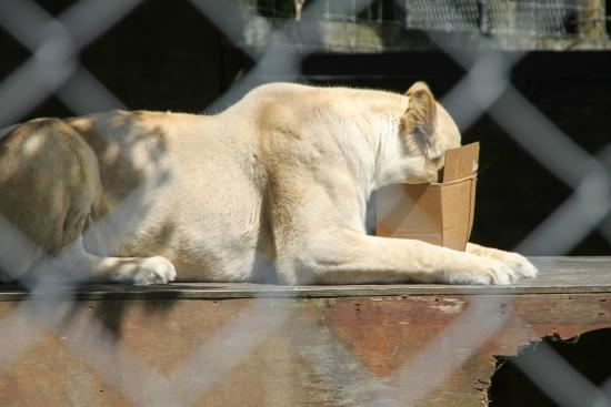 Kamo Wildlife Sanctuary: Enrichment Tour with Box of Treats