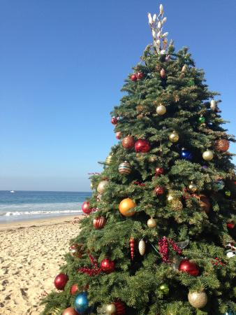 Christmas Tree On The Beach Picture Of The Beachcomber