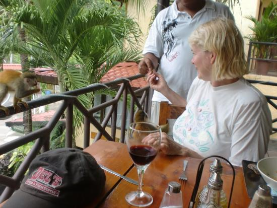Pacific Trade Winds: Feeding monkeys at Hotel Mimos