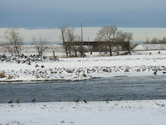 Bow River: Birds on the Bow