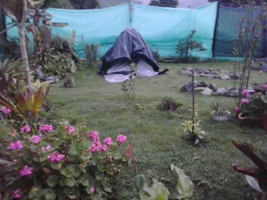 Hostal Casa del Loro : hermoso jardin